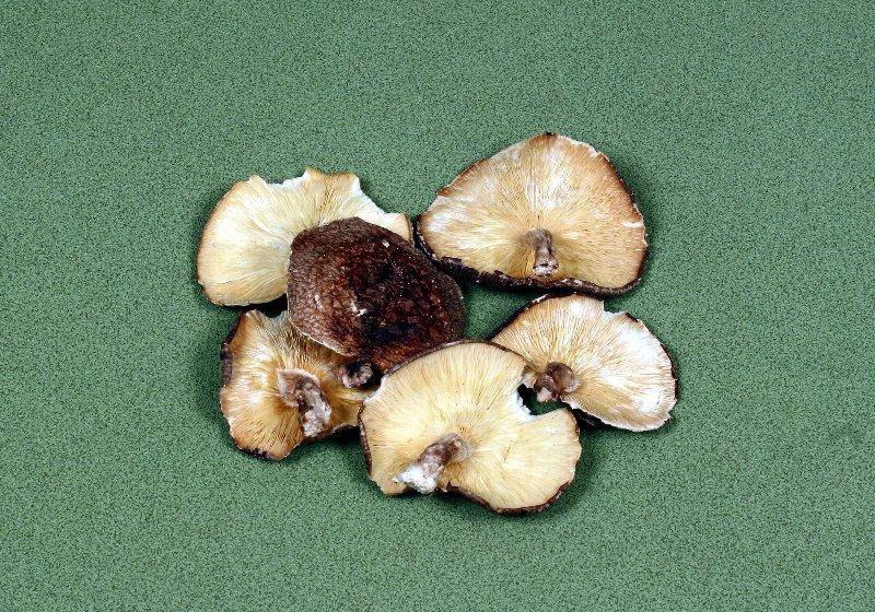 日本産原木乾椎茸 業務用大葉
