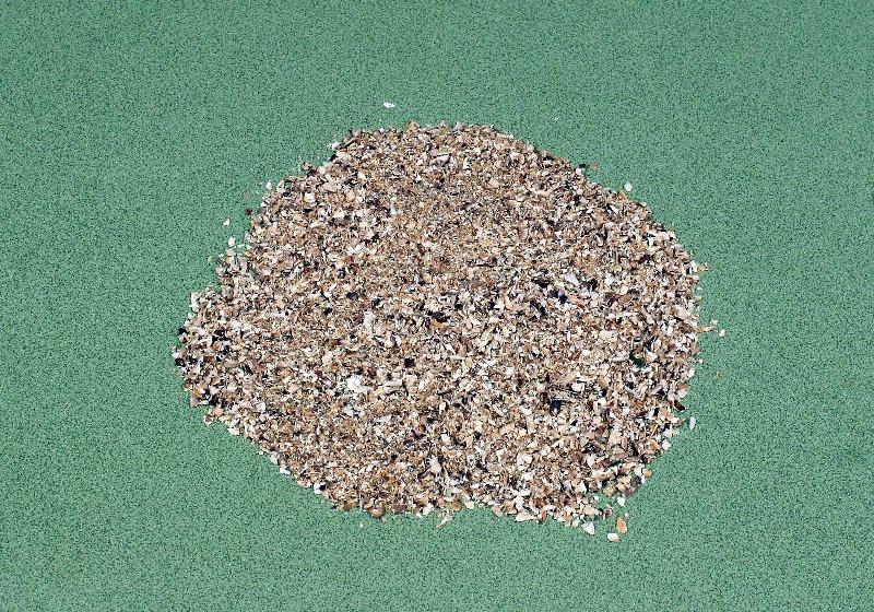日本産原木乾椎茸 粉