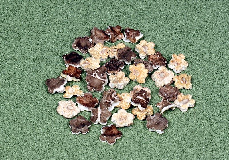 中国産菌床乾椎茸 梅花菇