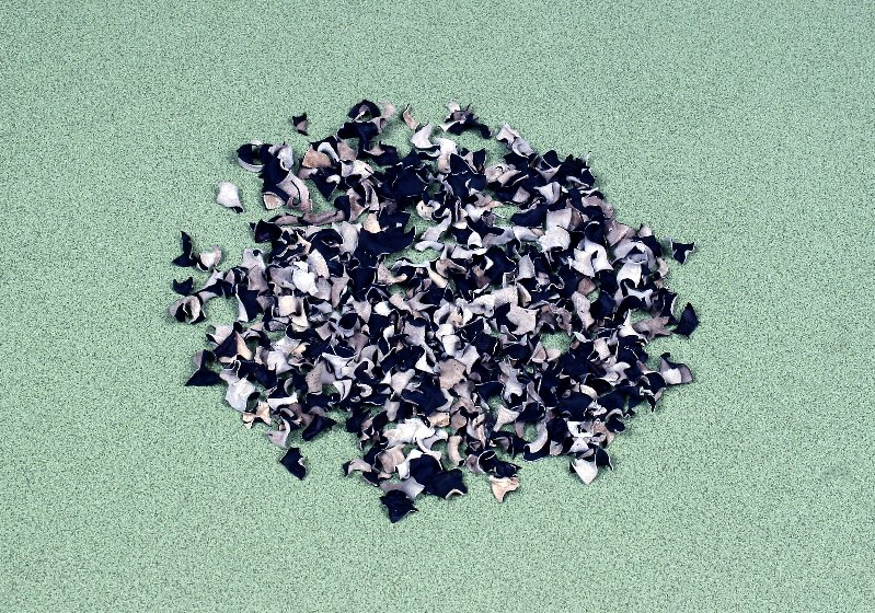 中国産菌床裏白きくらげダイスカット 2㎝角